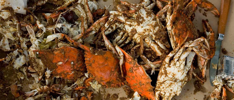 AN Crabs
