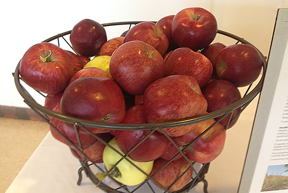 Basket of Local Apples, Santa Fe