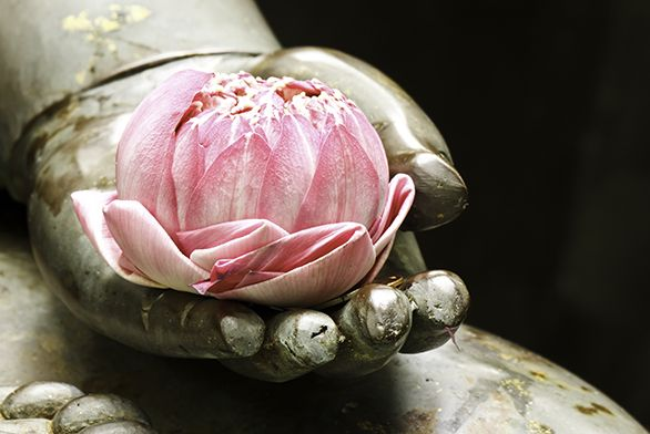 Buddha-hand-with-flower_web.jpg