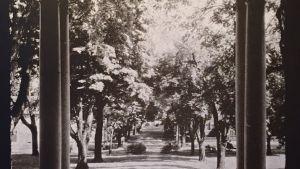 1933 Annapolis Campus Views 5 The Central Walk